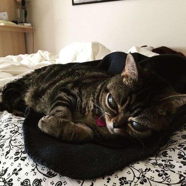 Кішка Матильда по кличці Інопланетянин стала черговою зіркою Instagram (15 фото)
