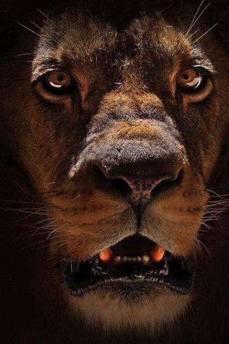 Тварини, з якими ризикнув би зустрітися далеко не кожна людина (48 фото)