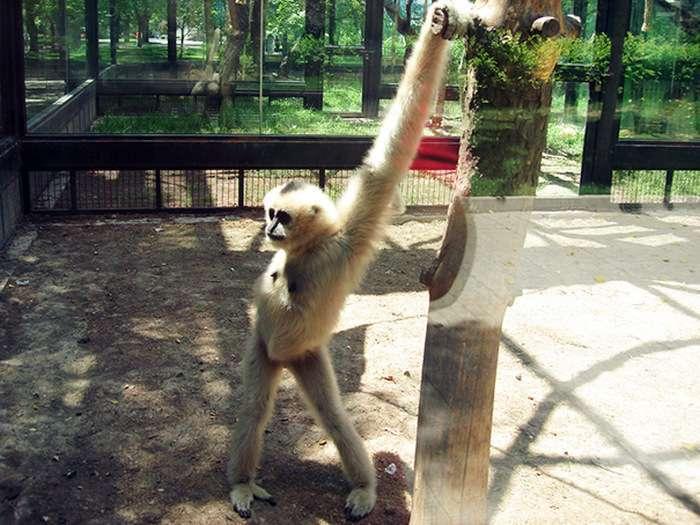 Тварини позують на камеру (42 фото)