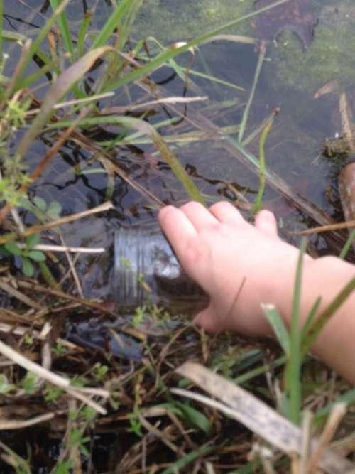 Створюємо замкнуту водну екосистему в банку (11 фото)