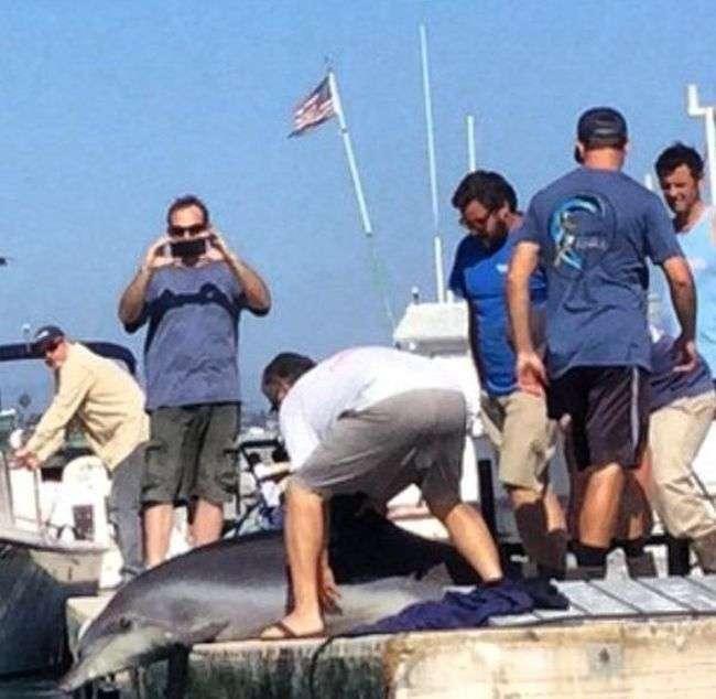 Дельфін зіпсував відпочинок американської сімї (6 фото + відео)