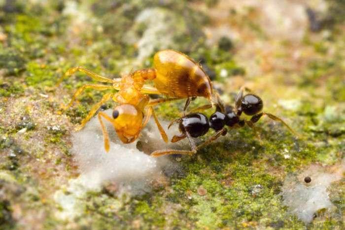 Жорстокі мурашині війни (53 фото)