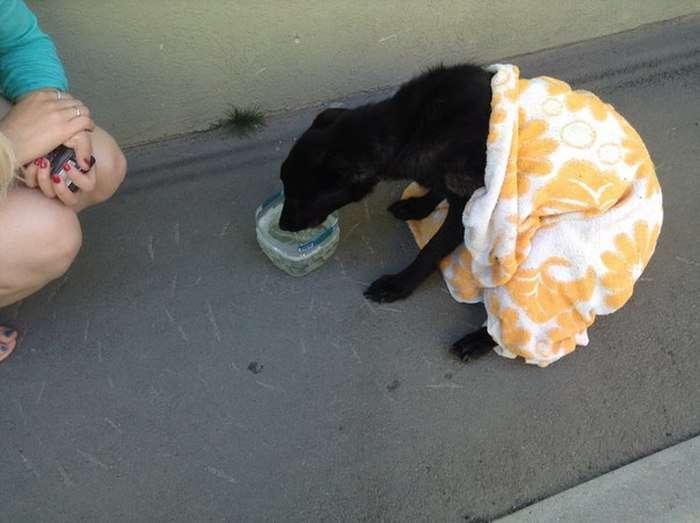 Порятунок нещасної собаки в Самарі (4 фото + відео)