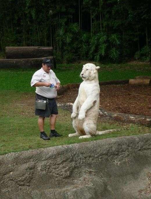 Смертельно небезпечні тварини теж можуть бути милими і забавними (25 фото)