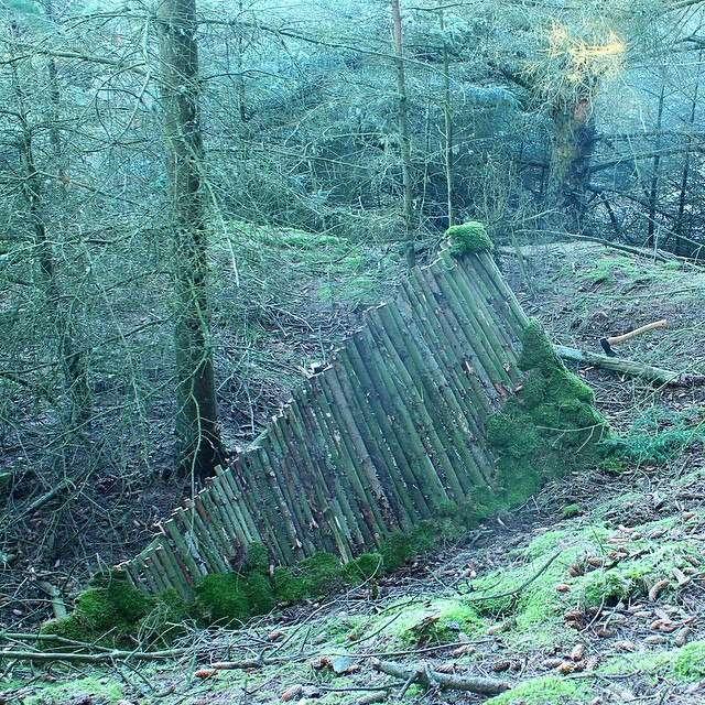 Затишний курінь у лісі (10 фото)