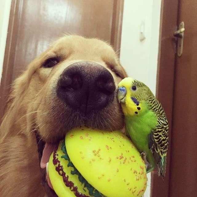 Кращі друзі (23 фото)