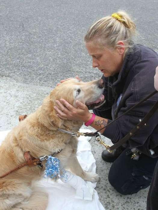 Собака-поводир зробила героїчний вчинок (5 фото)