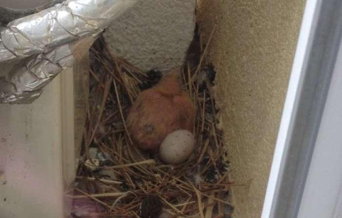 Гидке голубенок (13 фото)