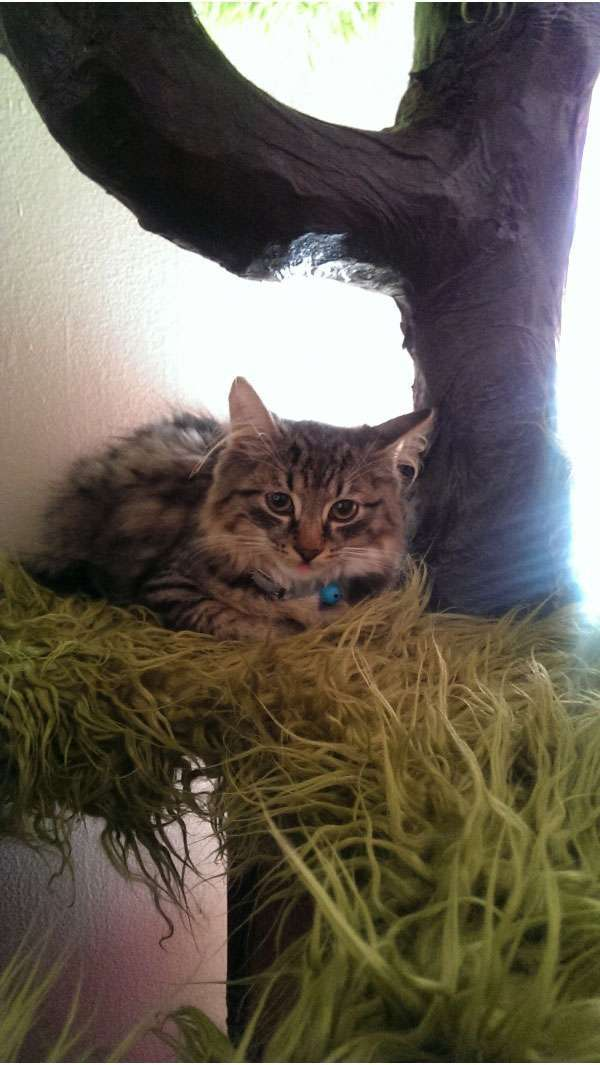 Будиночок для кота своїми руками (23 фото)