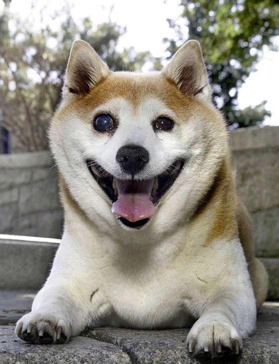 Кориця - найщасливіша собака у світі (9 фото)