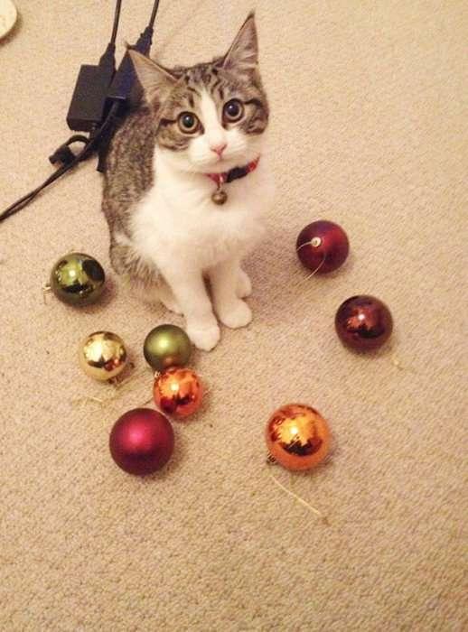 Кішки, які дуже люблять різні дрібнички (21 фото)