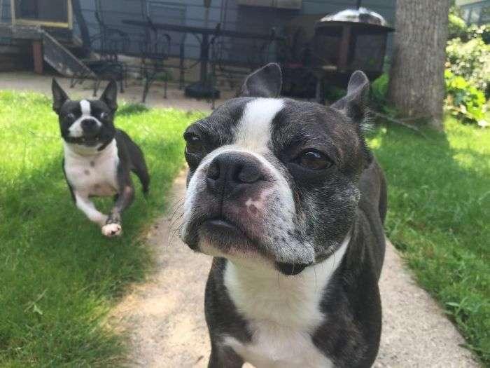 Незадоволений пес на прізвисько Вальтер (4 фото)