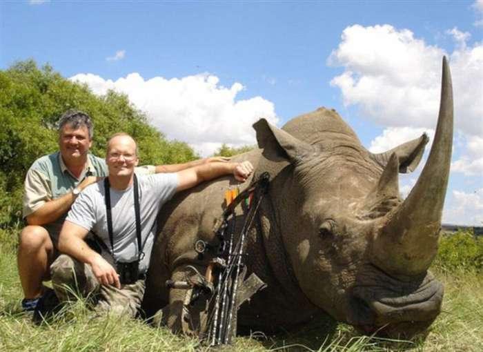 Сесіл, самий знаменитий лев Зімбабве, був убитий американським мисливцем-дантистом (6 фото)