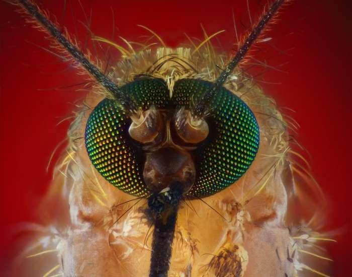 Детальне знайомство з хоботком комара (7 фото)