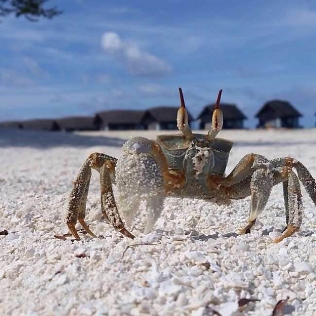 Найпопулярніші серед туристів острова світу (30 фото)