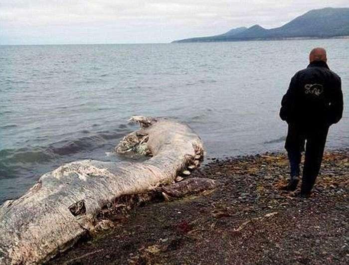 У Шахтарську виявили останки невідомого тваринного (5 фото)