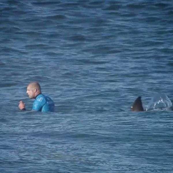 Серфінгіст Майкл Феннінг був атакований акулою прямо під час змагань (3 фото + відео)