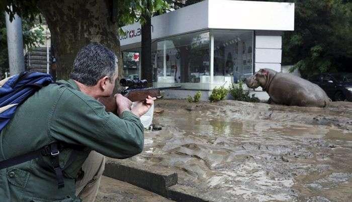 На вулицях Тбілісі шукають тварин, що втекли із зоопарку в результаті повені (19 фото + 2 відео)