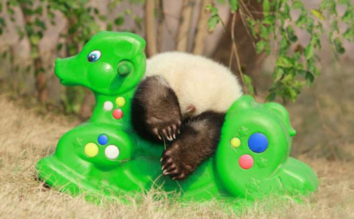 Китайський дитсадок для дитинчат панди (18 фото)