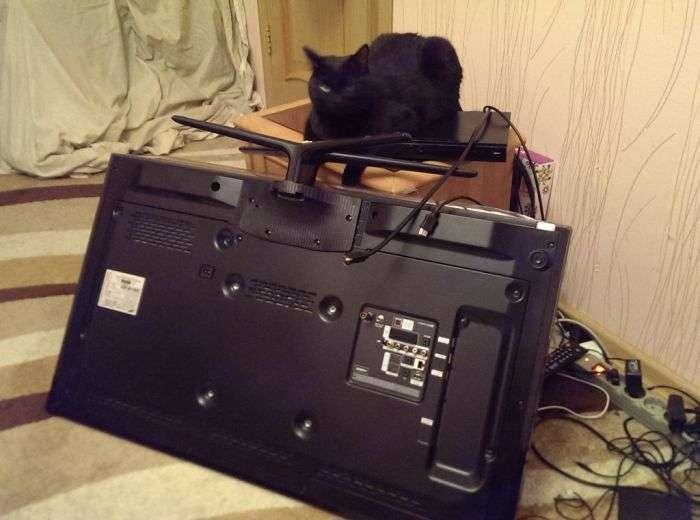 Неприємний сюрприз від кота (4 фото)