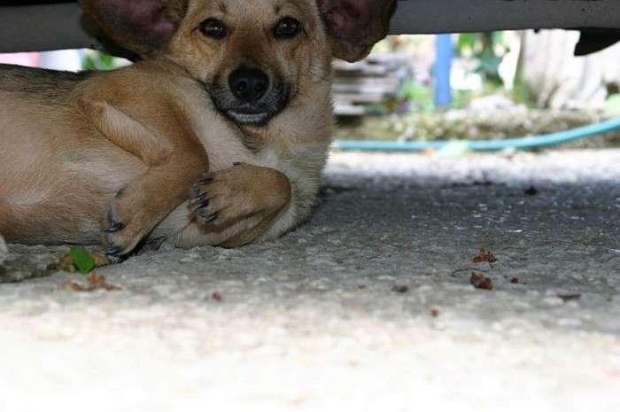 Як мужик собаці допоміг (18 фото)