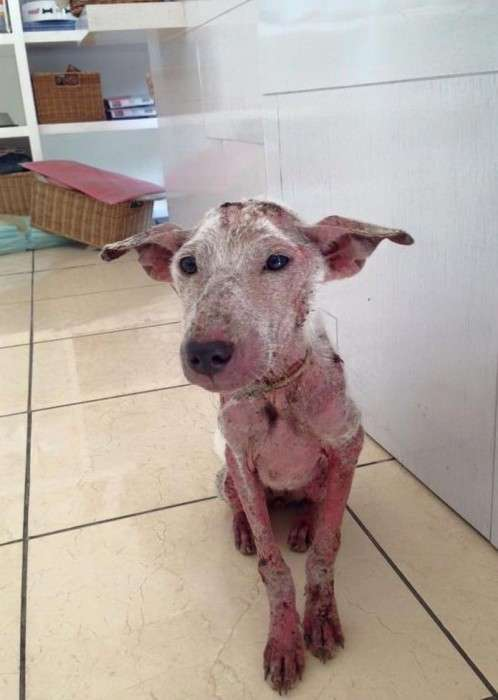 Як рятували собаку Келсі (15 фото)