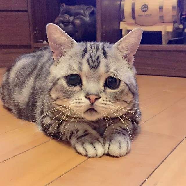 Сумна кішка по кличці Луху (14 фото)