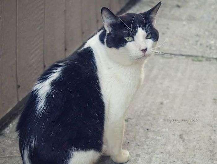 Порятунок бездомного кота (8 фото)