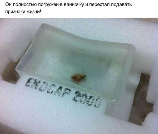 Таргани і екстремально низькі температури (8 фото)
