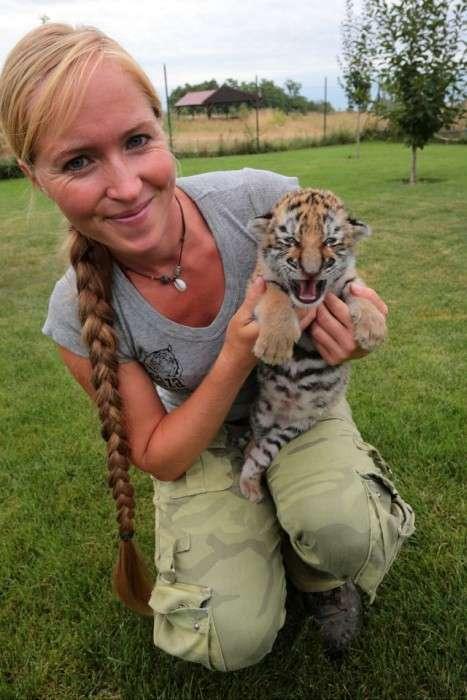 У словацькому зоопарку люди і собаки виховують маленького тигра (9 фото)