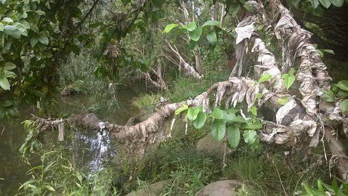 Австралійські комунальники борються з вологими серветками (6 фото)
