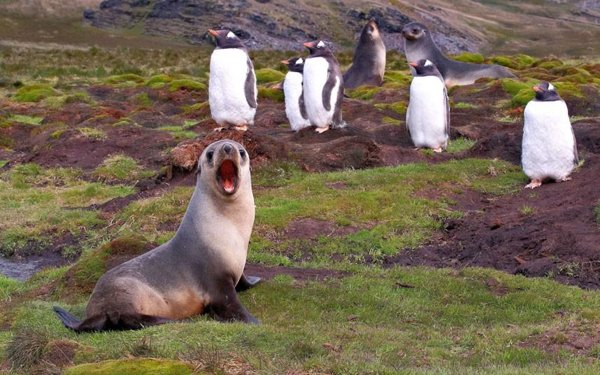 Человеческие эмоции животных зверушки,живность,питомцы, Животные