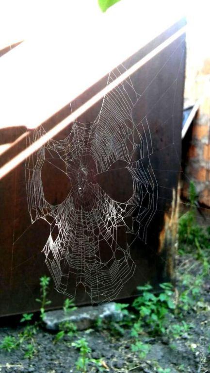 Пугающие природные монстры Интересное