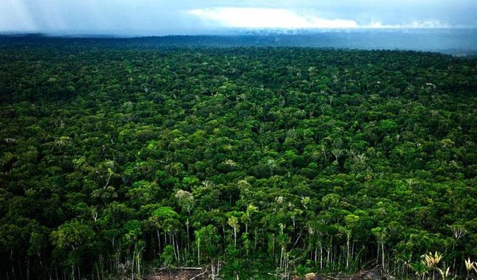 Большое фотопутешествие по лесам Амазонки путеествия, Путешествие и отдых