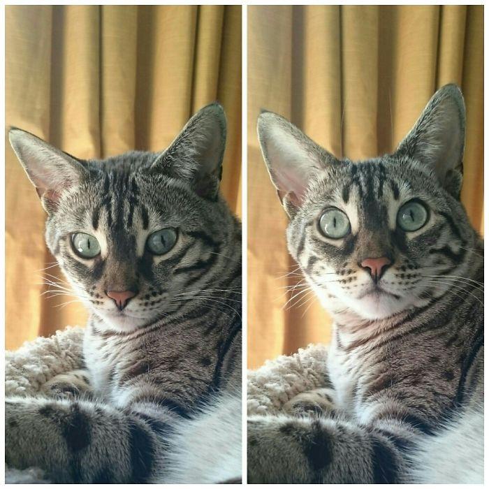 «Хороший мальчик»: питомцы до и после добрых слов хозяина зверушки,живность,питомцы, Животные