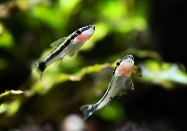 Как сделать отсадник для рыб своими руками зверушки,живность,питомцы, Животные