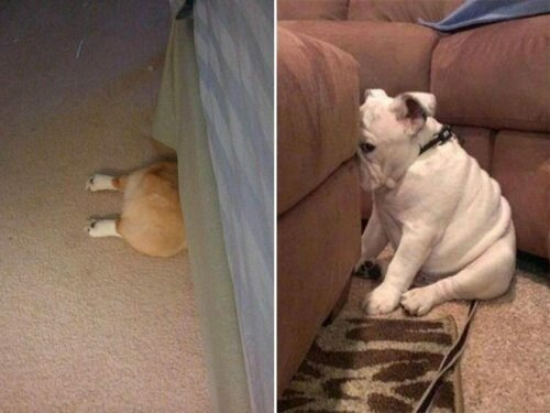 Собаки, которые очень любят играть в прятки юмор, приколы,, Юмор