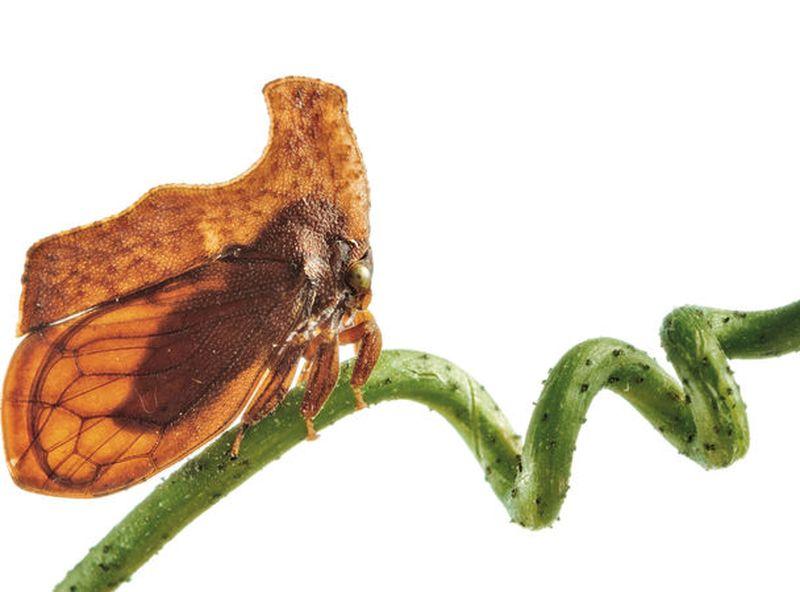 Горбатки, или бодушки — искусные мастера камуфляжа зверушки,живность,питомцы, Животные