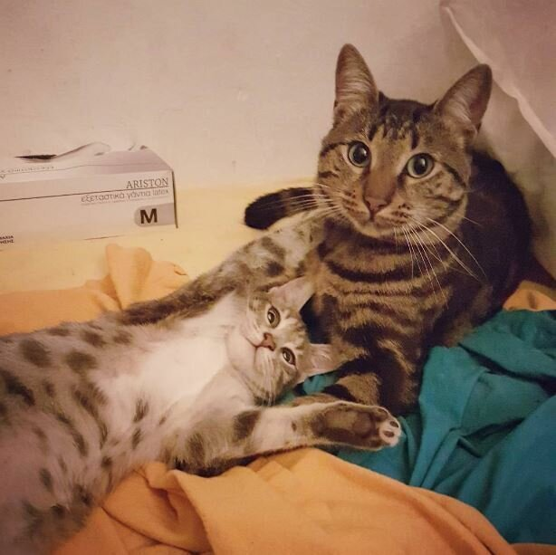 20 странных вещей, которые делают все владельцы котов, но не признаются в этом юмор, приколы,, Юмор