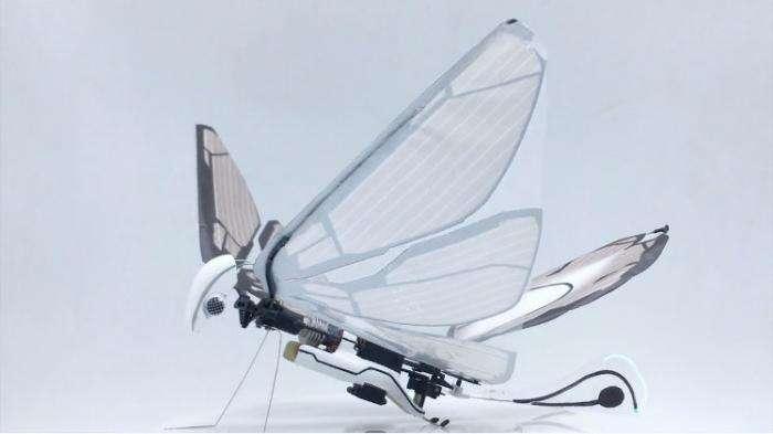 Этот робот почти неотличим от живых насекомых: взгляните сами хай-тек