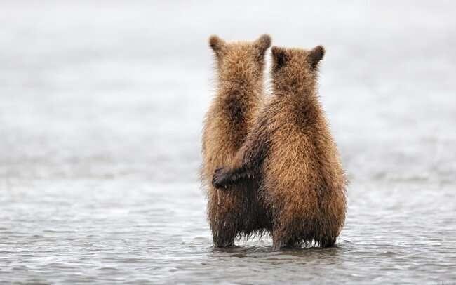 Звериные советы: О любви и ухаживаниях в мире животных   Интересное