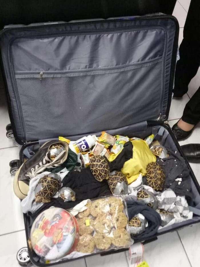 Брошенная контрабанда: в филиппинском аэропорту нашли более 1500 черепах, замотанных клейкой лентой   Интересное