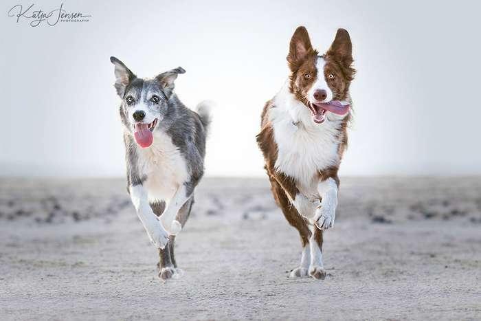 Счастливые летающие собаки: фотоподборка для поднятия настроения Интересное