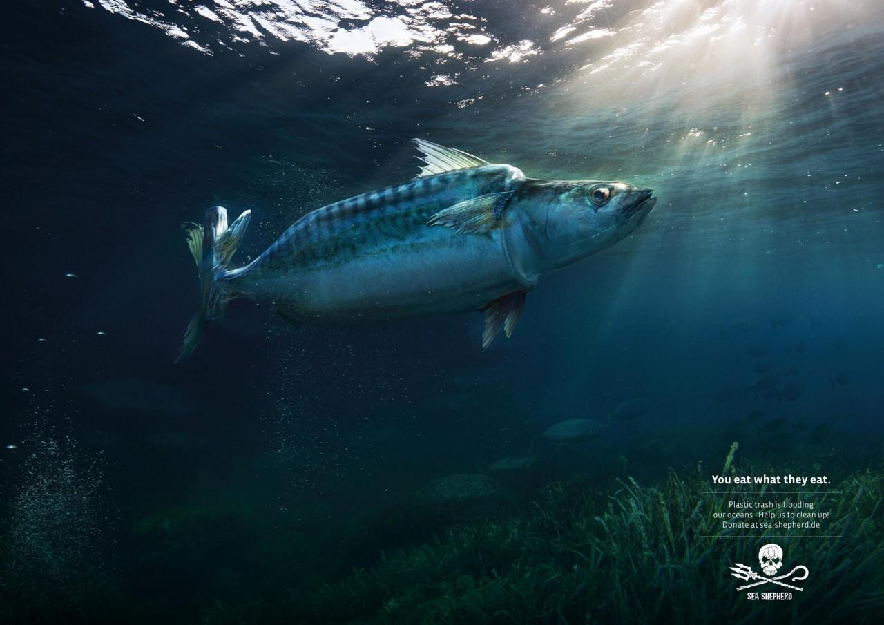 Несколько фото о том, что делает пластик с нашими морями и океанами trashtag
