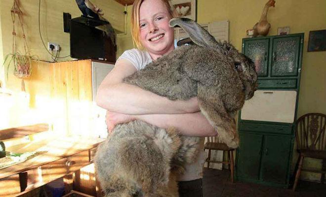 Животные, которые выросли аномально большими животные