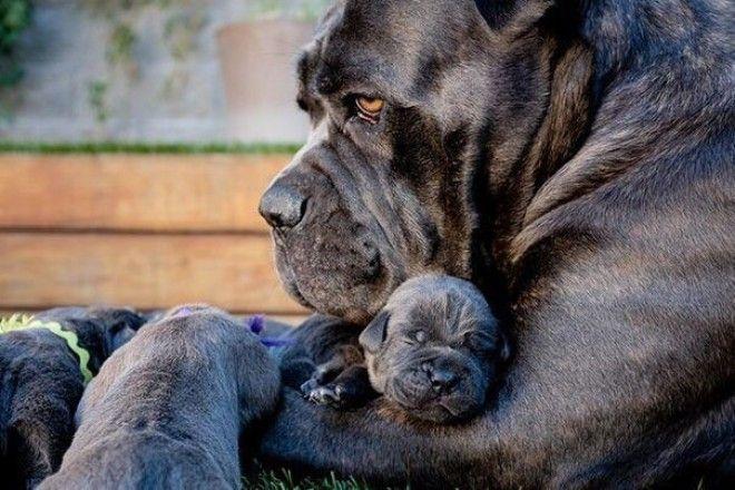 Мама есть мама... животные