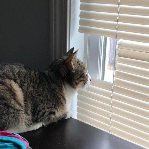 20 фотографий, доказывающих, что кошки — это море любви… и немножко головной боли