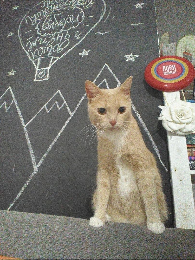 Пока девушка выбирала кота в приюте, к ней на колени запрыгнул персиковый красавец. И его хитрый план сработал! истории из жизни