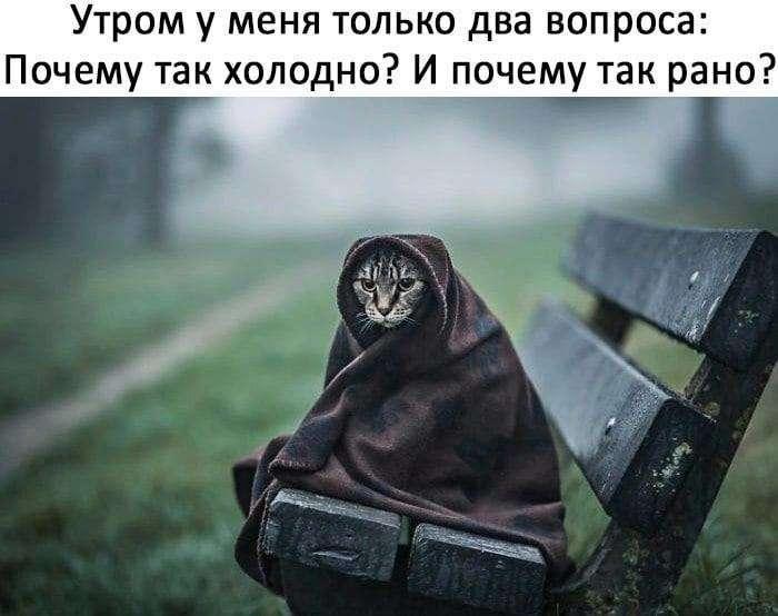 Еще Пушкин говорил, что кот, когда ходит налево... Весёлые