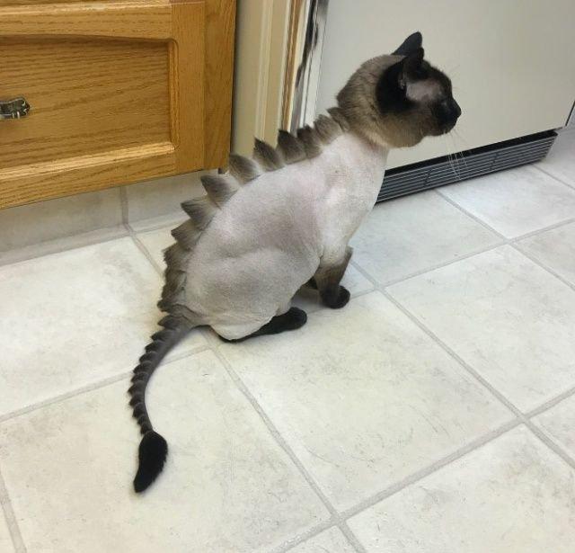 Когда хотел динозавра, но завел кота